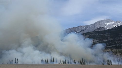 How Do Forest Fires Work?